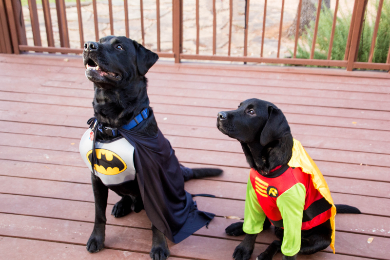 Champ and Moose Halloween Costume_sm
