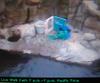 Ottercam